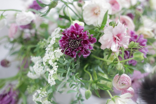 purple scabiosa